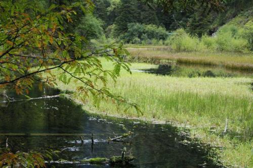 九寨沟图片欣赏:水上的草原