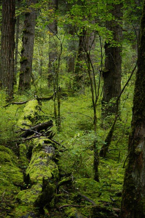 九寨沟图片欣赏:原始森林
