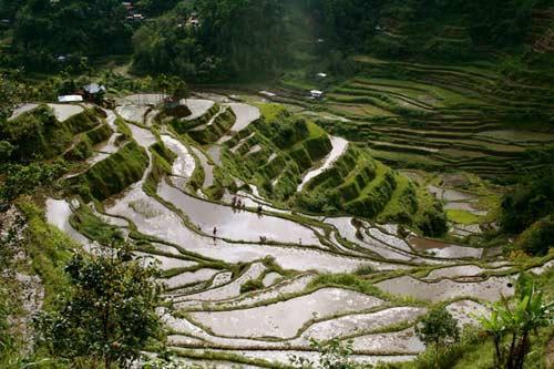 亚洲世界遗产-巴拿威梯田,菲律宾