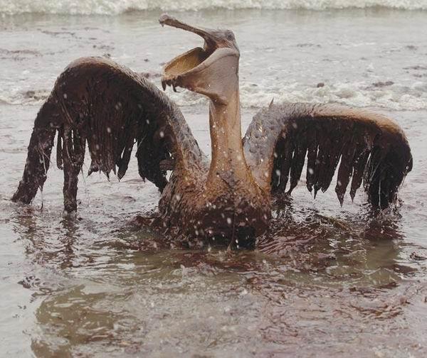 图片:油中窒息